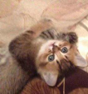 Котята рождены 29 ноября