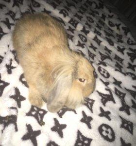Декоративный кролик 💗красавчик💗