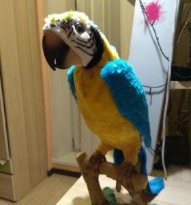 Продам говорящего попугая