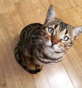 Кот-красавец