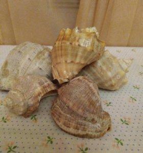 Ракушки морские для аквариума 5 штук