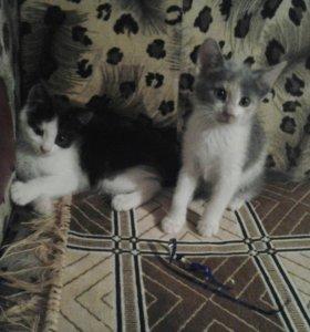 Отдам котят в хорошие руки котика и кошку