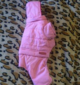 Куртка комбинезон для собачки, кошки