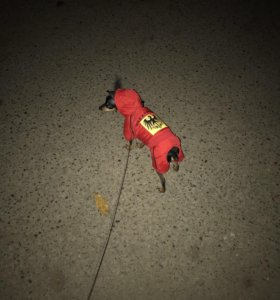 Куртка на маленькую собаку