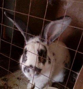 Кролики микс мясные
