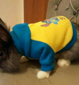 Декоративный кролик на вязку