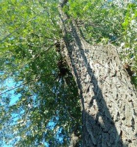 АККУРАТНО Спилю деревья любой сложности.