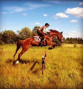 Предлагаются в аренду лошади