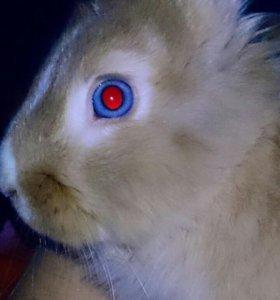 Кролик с большой клеткой