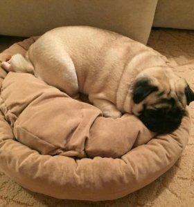 Одежда для собак,ЗооАтелье,грумер