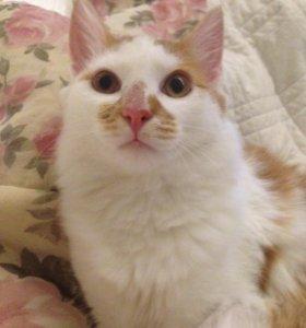 Розовоносый рыжий кот