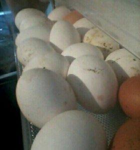 Яйца домашние за 3 десятка