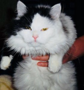 Кошечка в самые добрые руки