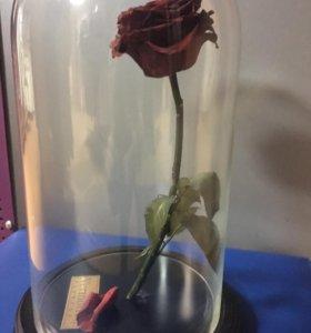 Живая роза в теч.5 лет