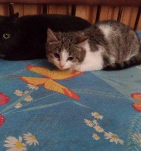 Котята 3 месяца мальчики и девочка