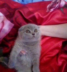 Продаются плюшевые котятки игривые комочки приуче