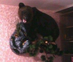 Чучело медведя