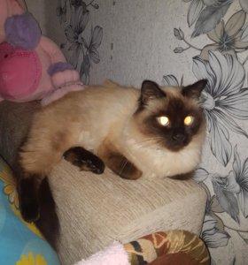 """Кошка """" Анфиса """""""