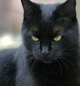 Черный кот в добрые руки