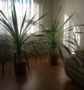 Растения, подробности и цена в лс обмен