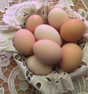 Домашнее яйцо (десяток)