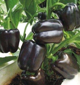 Черный перец - семена 20 шт