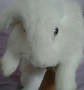 Кролики для фотосессии