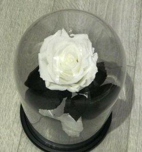 Роза в колбе. Подарок из Франции.