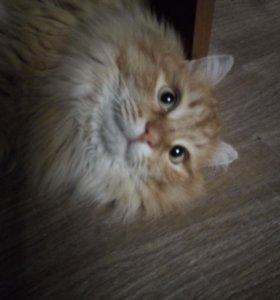 Кот, шерстяное солнышко!