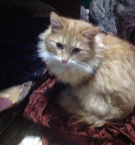 Рыженький котик Сэм