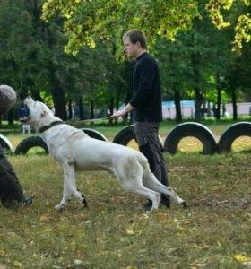 Профессиональная дрессировка собак, кинолог