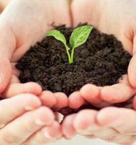 Удобрение для сада и огорода