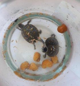 2 черепашки и 6 улиток с аквариумом на 40 литров