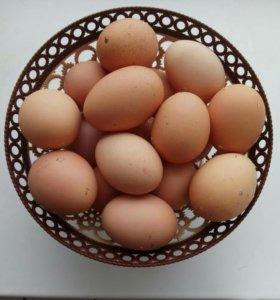 Свойские куриные яйца