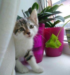 Котята милейшие!;)