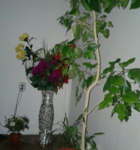 Дом. Цветы.