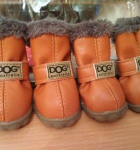 Ботинки для маленьких собак