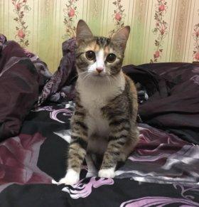 Кошку Мусю в добрые руки