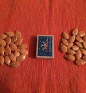 Семена тыквы мускатной