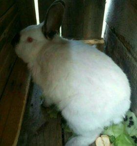 кролики и мяса кроликав