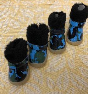 Ботинки для маленькой собаки