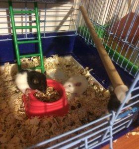 Крысята-малыши