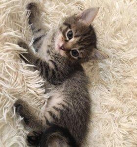 Отдам котят в добрые руки )))