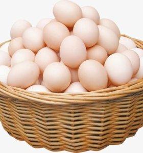 Яйца куриные (домашнии)