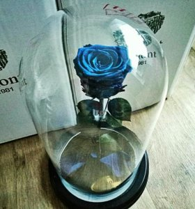 Роза в колбе Premium