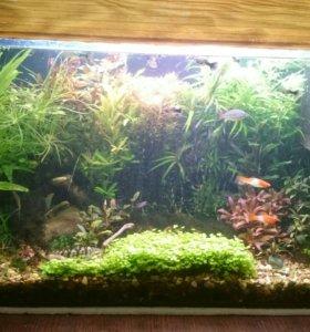 Растения для аквариуму