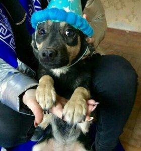 Маленькая собака в ответственные руки