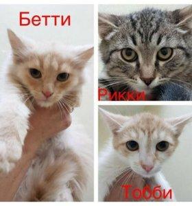 Котята подростки даром