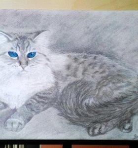 Картина простым карандашом. Портрет кота.