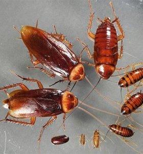 Уничтожение тараканов!